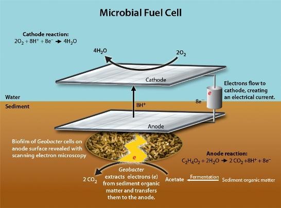 """La conversión de energía química en eléctrica es posible en ciertos dispositivos electroquímicos denominados células o pilas de combustible (""""Fuel Cells""""), donde la electricidad se obtiene a partir de una fuente externa de combustible químico que suele ser hidrógeno o etanol. Una variante reciente es la célula de combustible microbiana (Microbial Fuel Cell, MFC)."""