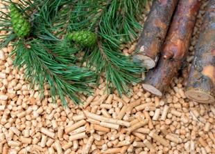 La biomasa resuelve el dilema de alimentos o combustibles.