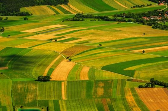 El dilema está entre la producción de alimentos o de combustibles. La opción más acertada, si se quiere evitar ese conflicto y satisfacer ambas necesidades, es la de usar la biomasa.