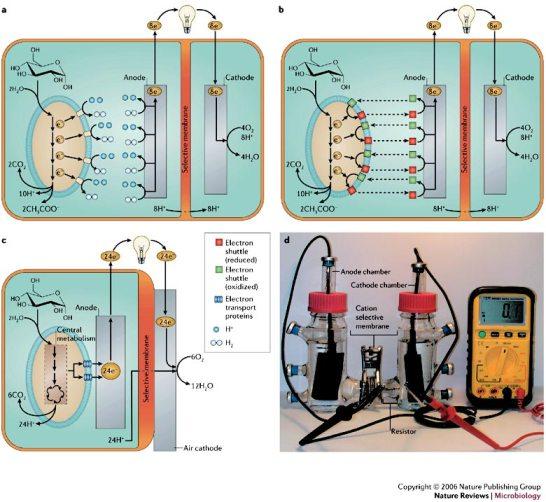 """La conversión de energía química en eléctrica es posible en ciertos dispositivos electroquímicos denominados células o pilas de combustible (""""Fuel Cells"""")."""