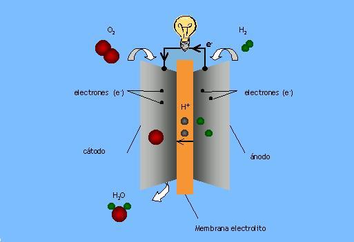 En el cátodo, el oxígeno reacciona con los protones para producir agua, que es el único subproducto obtenido a partir de una PEMFC alimentada por hidrógeno, como muestra la siguiente figura.