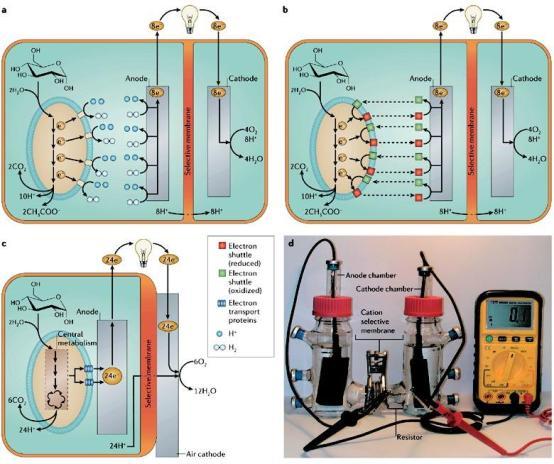Para otros usos estas celdas de combustible microbianas ya están funcionando en el mundo.