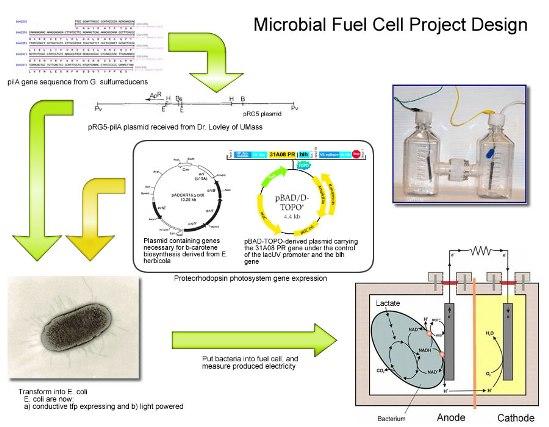 """En el laboratorio, las condiciones cambian. """"Si se le da el alimento y el aceptor de electrones que requieren, el metabolismo se activa y el tiempo de duplicación es de sólo 45 minutos"""", dijo."""
