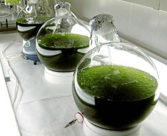 Los biocarburantes o biocombustibles son combustibles que se generan a partir de procesos biológicos, son de origen biológico no fosilizado.