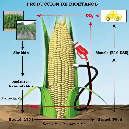 Por último, la ESA aboga por una agricultura de escalas, es decir, que la producción se amolde a las particularidades locales, regionales y globales, y no solo a esta última y se favorezca el desarrollo de biocombustibles procedentes de varias fuentes.