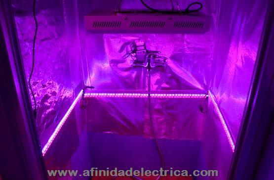 En la imagen siguiente se muestra una cámara de cultivo indoor iluminada en forma cenital y lateral con tiras de LEDs de colores que favorecen la floración.
