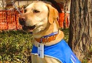 Rex, el primer perro rastreador de fallas eléctricas.