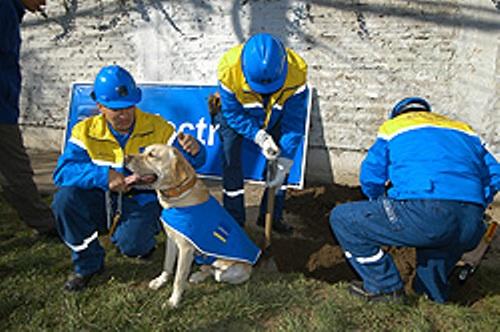 Rex ha participado en 15 atenciones de fallas eléctricas subterráneas, de las cuales ha detectado 13.