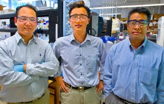 Lee dirigió la investigación al frente de un equipo que incluye, entre otros, a Ramamoorthy Ramesh, profesor de Ciencias de los Materiales en la Universidad de Berkeley, y Byung Yang Lee, del Berkeley Lab.